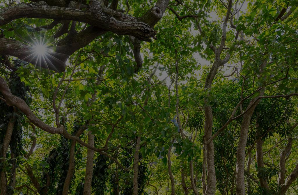 八丁堀・茅場町・新富町・日本橋の最高級メンズエステ グリーンスパ